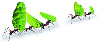 greenline ants small